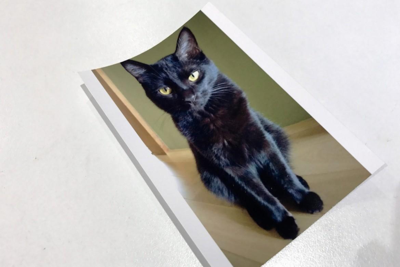 中山木型 ネコ写真から3Dプリンターで立体を作成する説明用