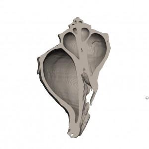 巻貝を工業用CTを使ってデータ化、そして3Dプリンターで出力2jpg