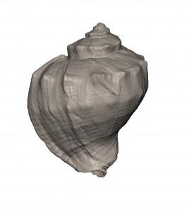 巻貝を工業用CTを使ってデータ化、そして3Dプリンターで出力1