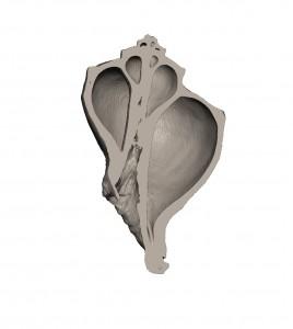 巻貝を工業用CTを使ってデータ化、そして3Dプリンターで出力3